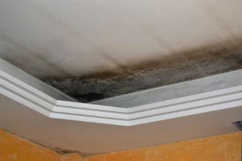 mold damage San Diego CA