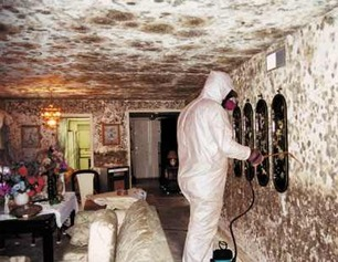 Preventing Mold San Diego CA