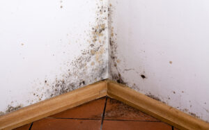Dealing with Mold Problems in San Diego Homes
