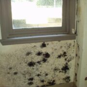 Harmful Mold Growth