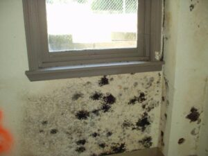 How San Diego Indoor Mold Effects Your Health