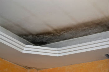 preventing mold damage San Diego CA