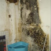 Mold Remediation in San Diego County CA