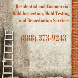 mold remediation San Diego CA