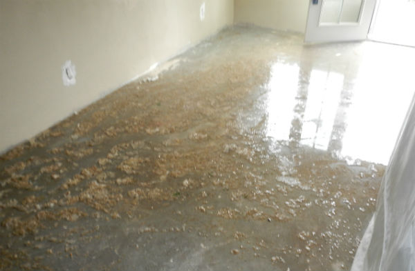 water damage and mold removal insurance claims