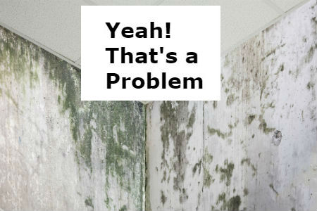 Mold Problem – How to Tell if You Have One