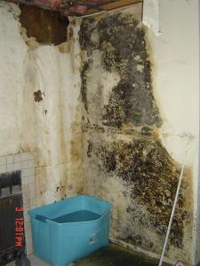 containing mold San Diego CA