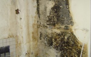 Toxic Black Mold and It's Hidden Dangers