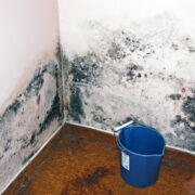 Ways to Prevent Mold in San Diego