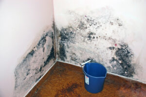 Mold in San Diego CA